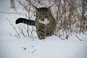 cat-188088_1920