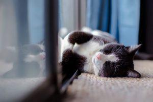cat-1903024_1280